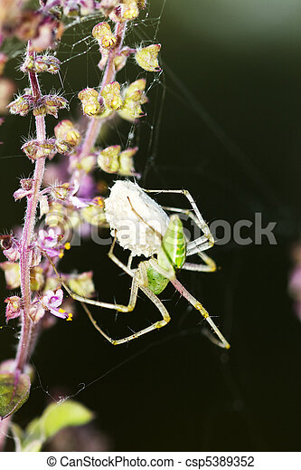 Garden spider with eggsac - csp5389352