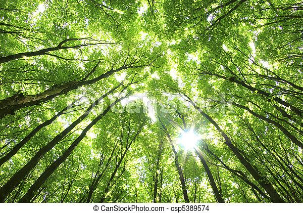 verde, árboles, Plano de fondo - csp5389574