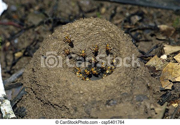 photo de la terre abeilles abeilles leur la terre trou csp5401764 recherchez. Black Bedroom Furniture Sets. Home Design Ideas