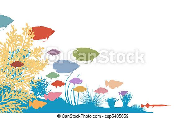 Reef - csp5405659
