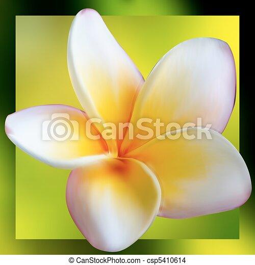 Frangipani Plumeria flower. EPS 8 - csp5410614