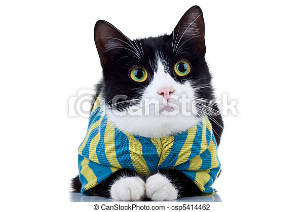 Cat Wearing Clothes Clipart Cat Wearing Clothes