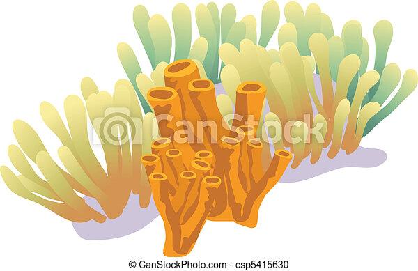Coral Reef - csp5415630