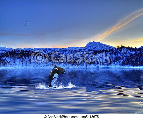 Killer Whale - csp5418675