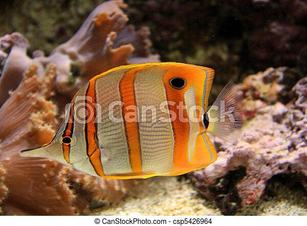 Stock foto von bunte salzwasser tank sch ne tropische for Salzwasser aquarium fische