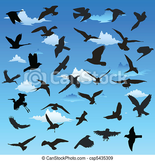 Birds in flight - csp5435309