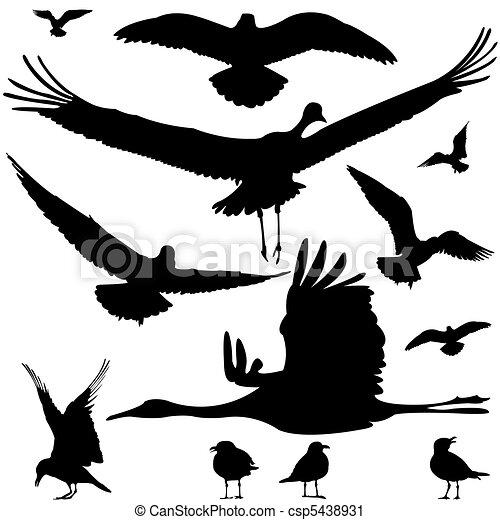 birds silhouettes - csp5438931