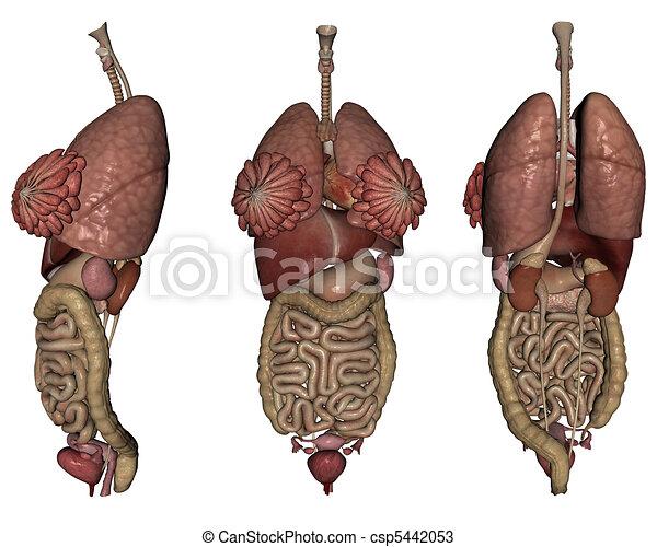Human organs - csp5442053