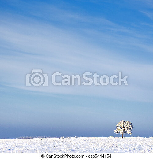 tree in frost and landscape in snow against blue sky - csp5444154
