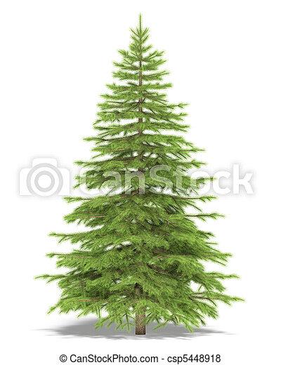 Spruce - csp5448918