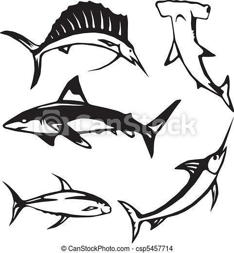 Five large ocean fish - csp5457714