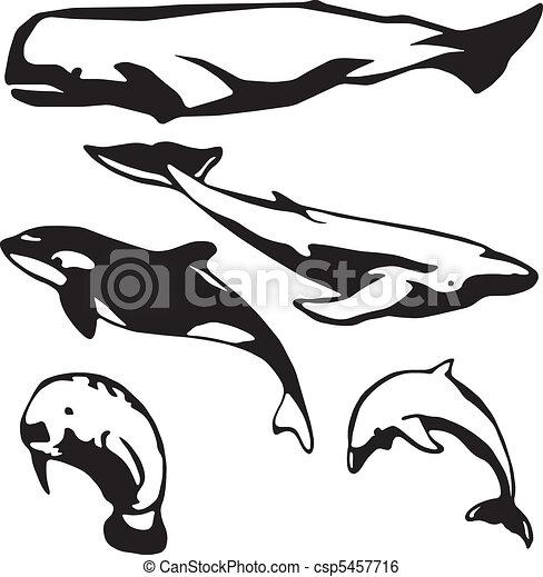 Marine mammals - csp5457716