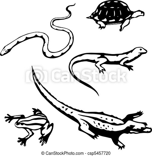 Reptiles and amphibians - csp5457720