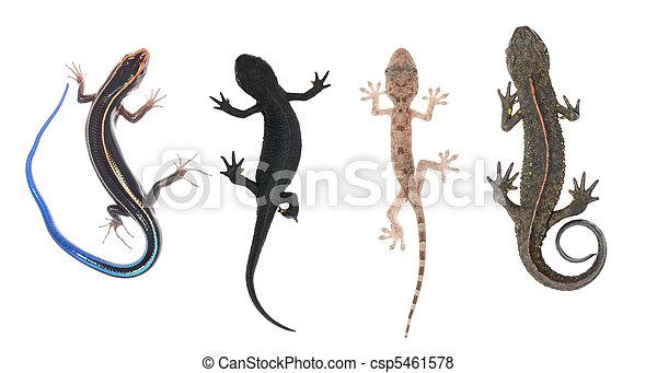 上昇, 動物, コレクション - csp5461578