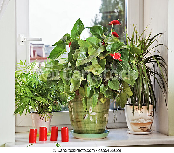 Flowers and red candles on window-sill - csp5462629