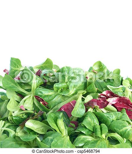 Corn salad and radicchio - csp5468794
