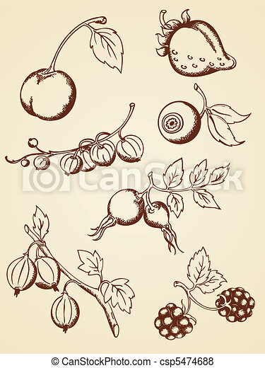 hand drawn vintage berries - csp5474688