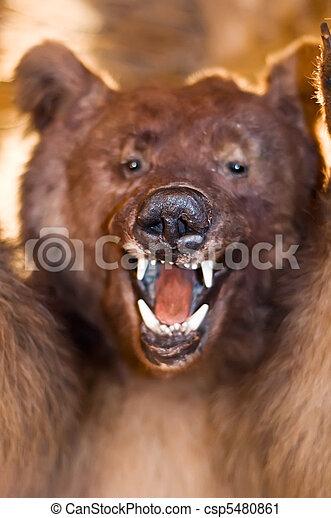 Wild Bear - csp5480861
