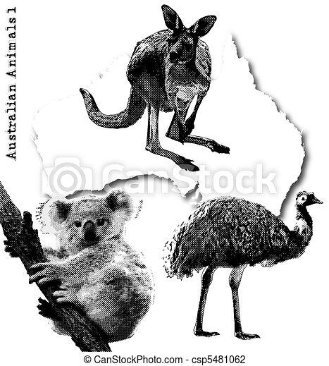 Australian Wildlife Drawings Vector Australian Animals