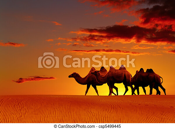 Desert fantasy, camels walking - csp5499445