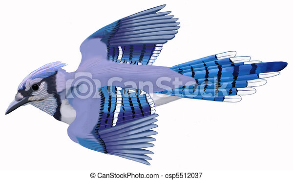 Stock Illustrations of Blue Jay 3 - Blue Jay - Cyanocitta cristata ...