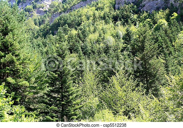 Pyrenees trees forest mountain summer scenics - csp5512238