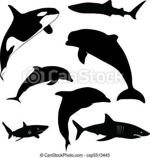 sea mammals and sharks - csp5513443