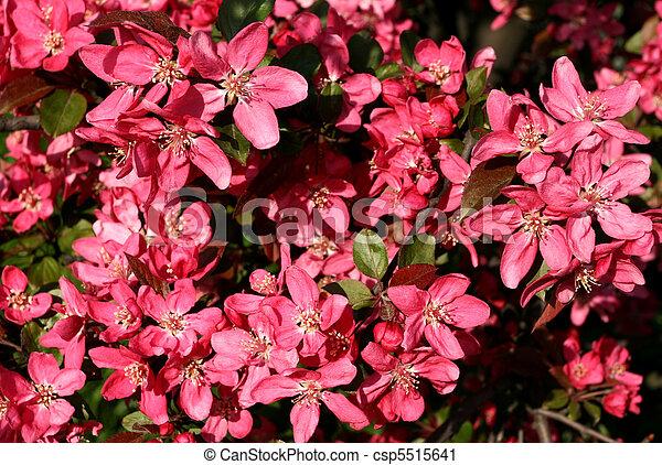 Photographies de rose pomme fleur printemps arbre - Fleurs roses de printemps ...