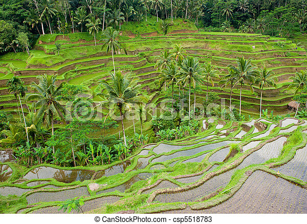rice terraces of bali, indonesia - csp5518783