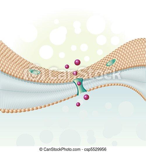 cell membrane - csp5529956