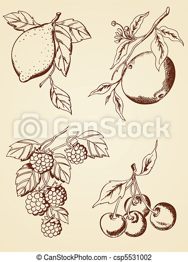 hand drawn  berries and fruits - csp5531002