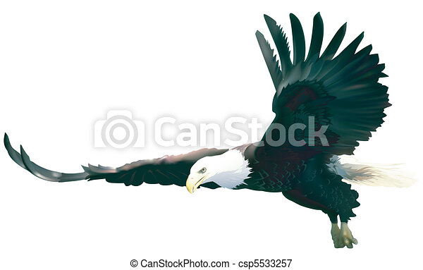 Flying Bald Eagle - csp5533257