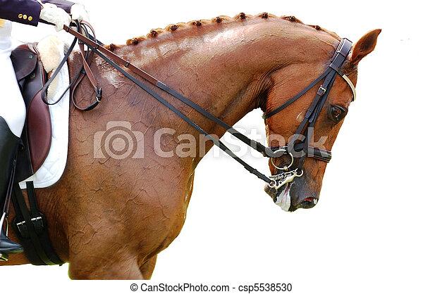 Equestrian - Dressage Horse - csp5538530