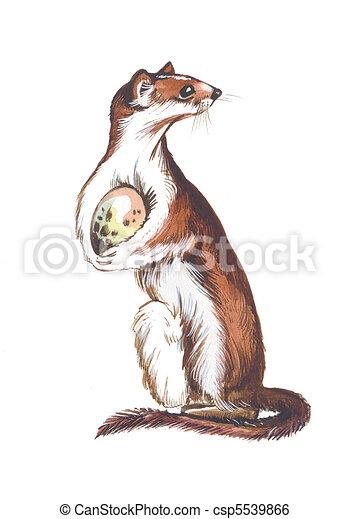 Illustration de belette weasel stolen birds egg - Dessin de belette ...