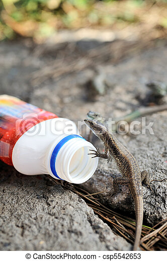 Viviparous lizard and plastic bottle   - csp5542653