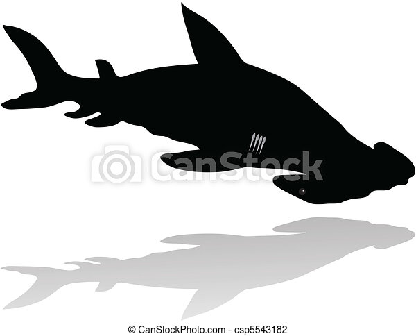 hammer fish  - csp5543182