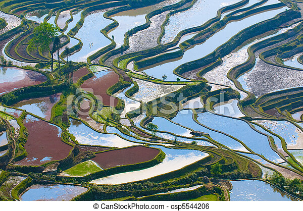 rice terraces of yuanyang,  yunnan, china - csp5544206