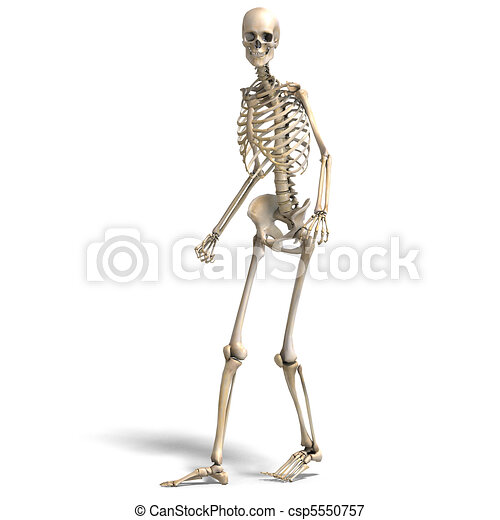 anatomical correct male skeleton. 3D rendering and shadow over white - csp5550757