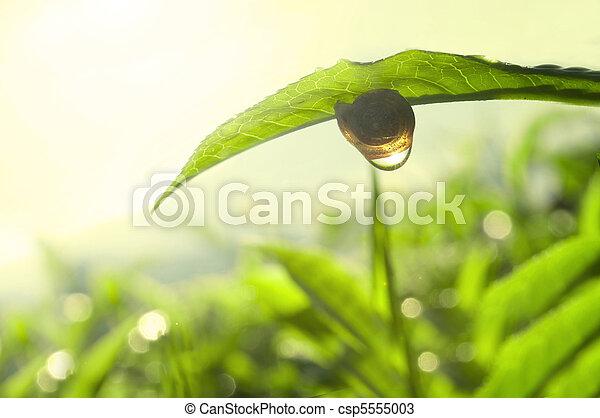 tea nature green concept photo - csp5555003
