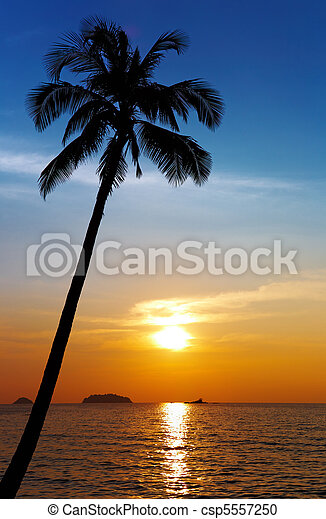 Palm tree silhouette at sunset - csp5557250