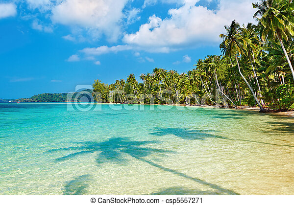 Coconut palms on the beach - csp5557271