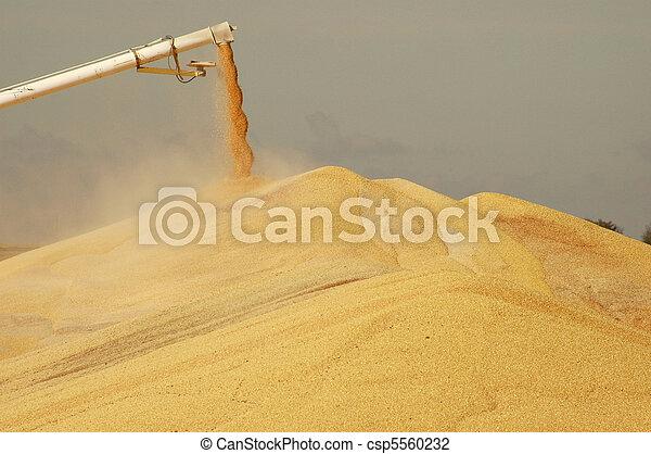 Surplus corn discharging from spout - csp5560232