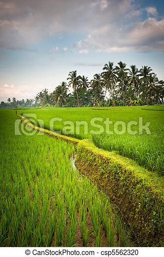 rice terraces of bali, indonesia - csp5562320
