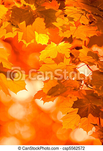 autumn leaves, very shallow focus - csp5562572