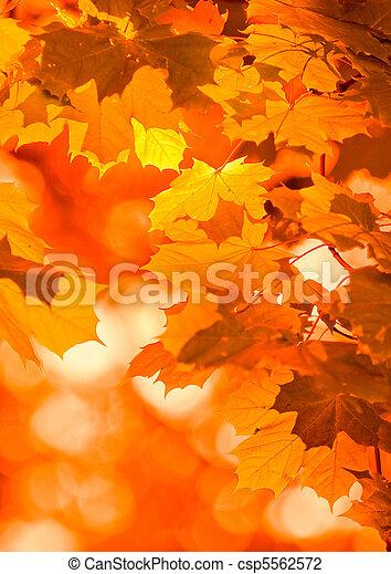 autumn leaves, very shallow focus - csp5562572