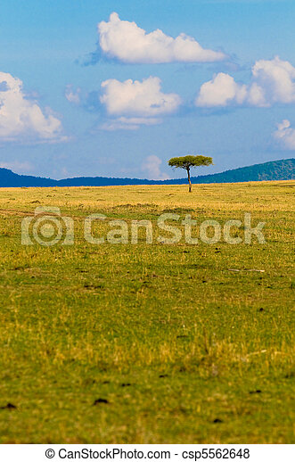 tree in savannah, typical african landscape - csp5562648