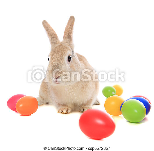 Easter bunny - csp5572857