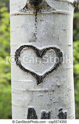 bark heart - csp5574350