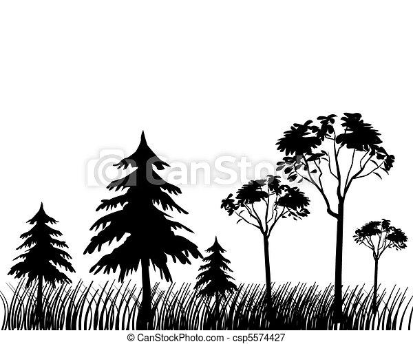 Forest - csp5574427