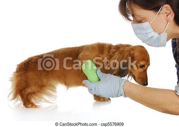 veterinary care - csp5576909